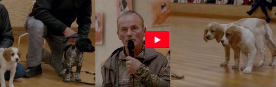La Preuve de la sérénité des chiens d'arrêt  épagneuls bretons keranlouan